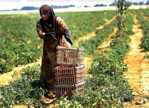 «الزراعة»: برامج لدعم «الريفيات» المشاركة فى الإنتاج الزراعى وسنحارب الفقر