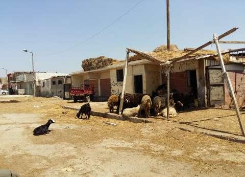 الإسكندرية: المواطنون يتجاهلون سوق «مشهور» ويلجأون لـ«الجمعية»