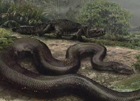 بعد مهاجمة الثعابين لقرية بالبحيرة.. تعرف على أضخم أفعى عاشت على الأرض