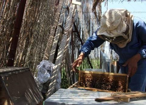 شبشير الحصة.. مملكة «عسل النحل» تُصدر منتجاتها للخارج