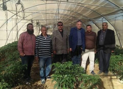 """""""تعمير جنوب سيناء"""": 121 مليون جنيه لتحويل الإقليم إلى سلة غذائية"""