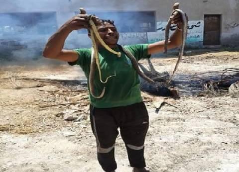"""نشطاء في رعاية الحيوان يرفضون سم واصطياد الثعابين: """"البيئة محتاجاها"""""""