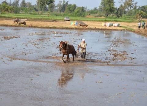 المحاصيل الصيفية «أزمة سنوية للحكومة».. والحل فى تحديد المساحات المنزرعة حفاظاً على المياه.. وإعطاء فرصة للتوسع فى زراعة القطن