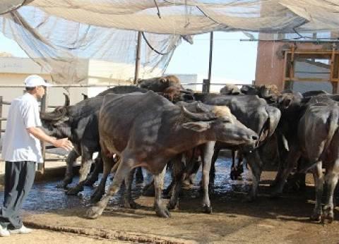 بريد الوطن| من المسئول عن تهديد الثروة الحيوانية فى مصر؟
