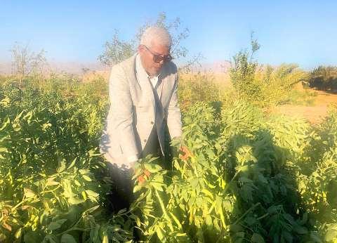 نقيب الزراعيين: مشروع «سهل القاع» يجعل جنوب سيناء سلة غذاء لأبنائها
