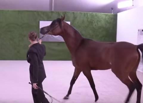 بالفيديو| حصان عربي أصيل هدية ولي عهد أبو ظبي للرئيس الصيني