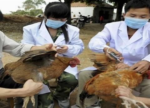"""الإمارات تحظر استيراد دواجن حية من السعودية بسبب """"إنفلونزا الطيور"""""""
