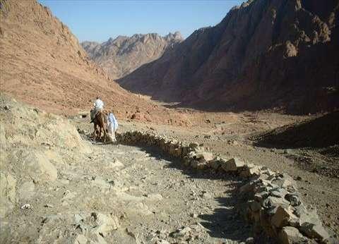 """""""الزراعة"""": 10 ملايين و389 ألف جنيه حصيلة بيع 15 قطعة أرض لأبناء سيناء"""