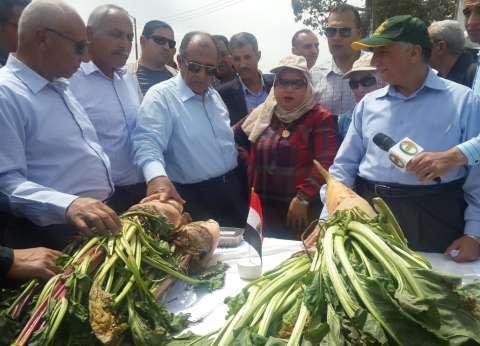 """""""زراعة كفر الشيخ"""": توزيع 12 ألف إردب قطن وزراعة 154 ألف فدان أرز"""