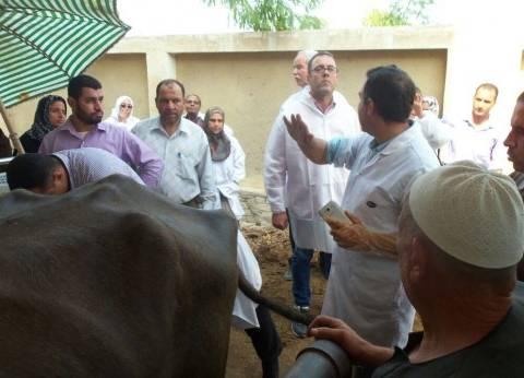 محافظ الدقهلية: تحصين 280 ألف رأس ماشية وأغنام ضد مرض الحمى القلاعية