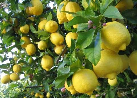 أسعار الفاكهة في سوق العبور اليوم.. والليمون والكانتلوب يتراجعان