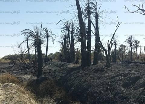 السيطرة على حريق بمزرعة مواشي ونفوق 10 أبقار بالفيوم