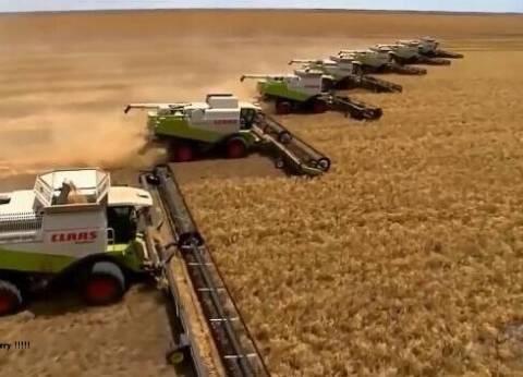 """""""تموين الوادي الجديد"""": إنهاء موسم توريد القمح بإجمالي 156 ألف طن"""