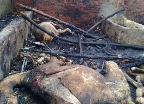 نفوق 10 رؤوس ماشية إثر حريق مزرعة في القليوبية