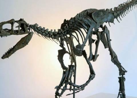 """هشام سلام: اكتشاف """"الديناصور المصري"""" حدث علمي تاريخي"""