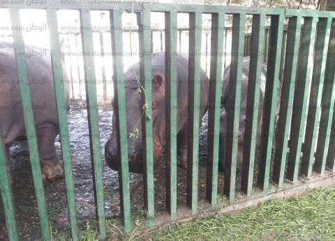 بالصور| أهالي الفيوم يتوافدون على حديقة الحيوان للاحتفال بشم النسيم