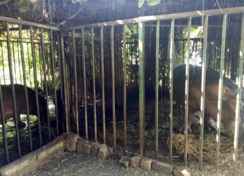 بالصور| حديقة حيوان بني سويف تستعد لاستقبال المواطنين في العيد