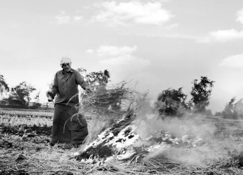 «قش الأرز» فى الدلتا: «الحرق على عينك يا بيئة»