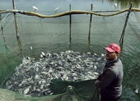 «مريوط».. السمك هزيل.. والمساحة تقلصت 80٪: خيرها كان زمان