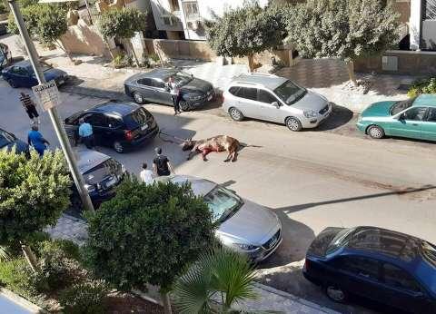 """مصور واقعة سحل """"أضحية شيراتون"""": """"الجاموسة تعرضت لحفلة تعذيب في الشارع"""""""