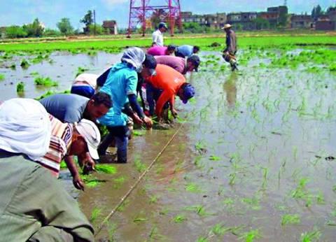 """""""فاو"""": العراق خسر 40% من إنتاجه الزراعي"""
