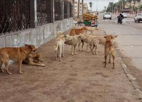 """""""الزراعة وحقوق الحيوان والإعلام"""".. جهات معنية بحماية المجتمع من الكلاب"""