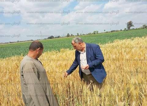 """وكيل """"زراعة الغربية"""": بدء حصاد محصول القمح"""