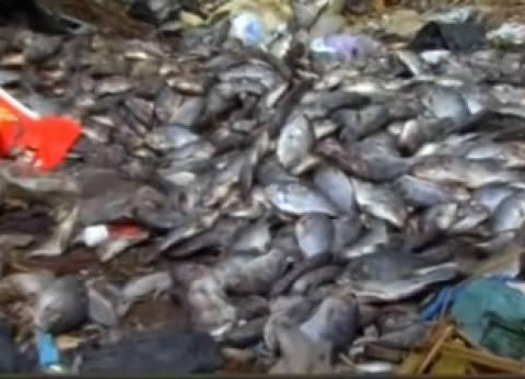 """""""الصناعات الغذائية"""": طرح 30 طن أسماك يوميا بالمجمعات الاستهلاكية"""