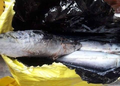 """ضبط أسماك """"مجمدة"""" منتهية الصلاحية في حملة بالبحيرة"""