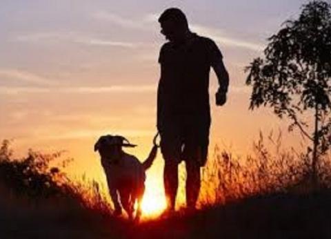 بعد صورة طالبة الثانوية العامة.. كيف تكون الكلاب داعما نفسيا لك؟