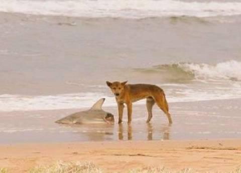 """كلب وقرش وثعبان.. ابطال الصورة الأكثر """"أسترالية"""" في العالم"""