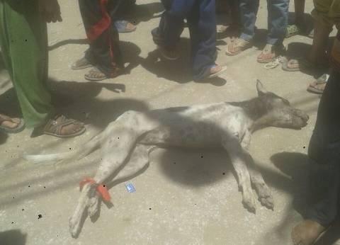 """بالصور: """"بيطري الفيوم"""" يعدم """"كلب ضال"""" عقر 17 بينهم 15 طفلا"""