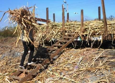 «وادى النيل» فى قبضة «مافيا السوق السوداء».. والسبب غياب الجمعيات الزراعية
