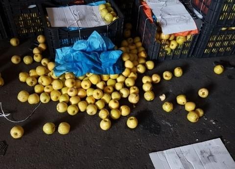 مصدر أمني: شحنة مخدرات ميناء دمياط تشمل 5 ملايين قرص كبتاجون وطني حشيش