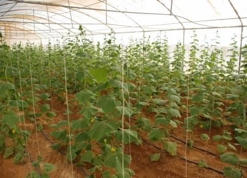 """""""الزراعة"""": افتتاح المرحلة الأولى من مشروع الـ20 ألف فدان غرب المنيا"""