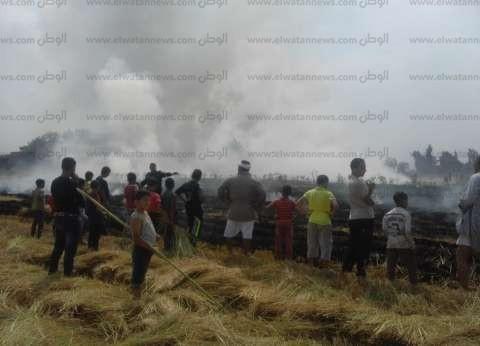 بالصور| الإطفاء تسيطر علي حريق 10 أفدنة من قش الأرز في الدقهلية