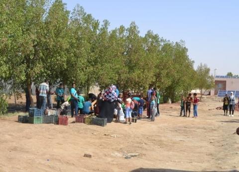 """""""تعليم الوادي الجديد"""" تنفذ مشروع زراعة أشجار المورينجا"""