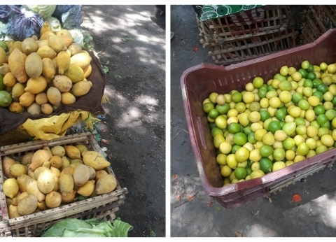 """بسبب الليمون..""""زراعة النواب"""" توضح لماذا ارتفعت أسعار الخضروات والفاكهة؟"""