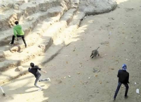 ولو نطقت حيوانات «حديقة الإسكندرية» لاستغاثت من اعتداءات البشر