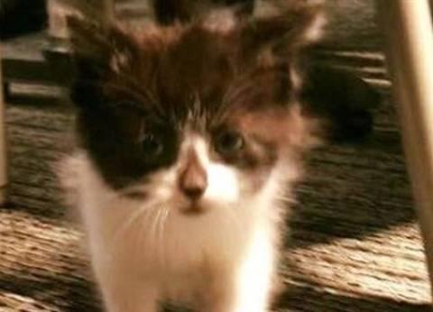 بعد اختبار صارم.. قطة صغيرة تنضم إلى الشرطة الأمريكية