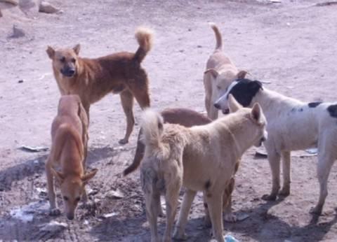 هذه المشاهد قد تنتهي من مصر بعد تطبيق قانون حماية حقوق الحيوان