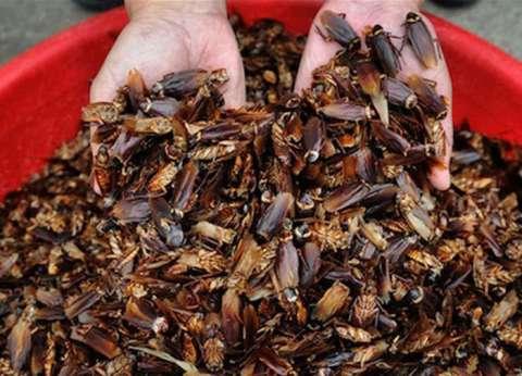 """الصين تقدم وجبات غذائية لمليار """"صرصور"""" بوزن 7 أفيال"""