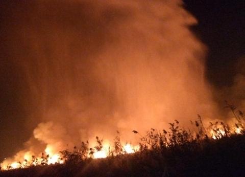 """حريق بزراعات """"فارس"""" في أسوان"""