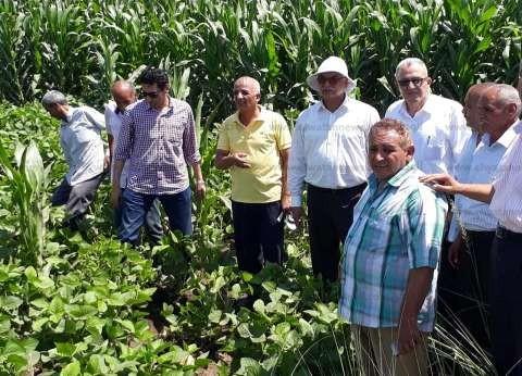 حملات توعية للفلاحين في كفرالشيخ لتحسين زراعة الذرة الشامية