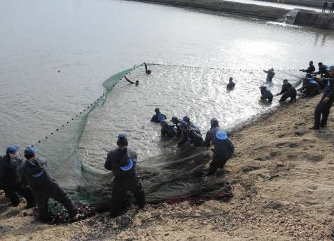 حكايات الصيادين فى المشروع السمكى: «الشبك لم السمك»