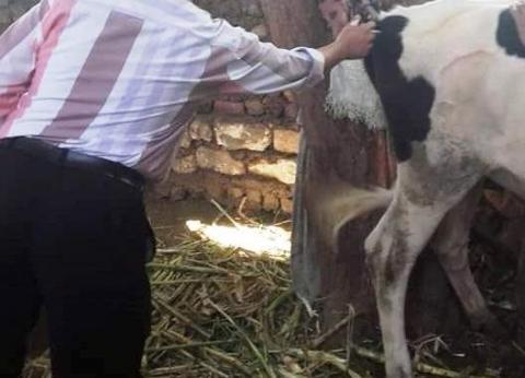 محافظ سوهاج: تحصين 4 آلاف رأس ماشية ضد مرض الجلد العقدي