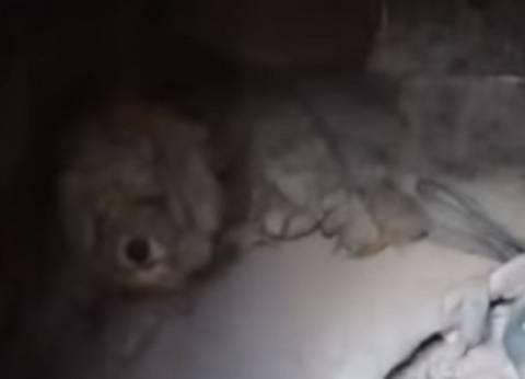 بالفيديو| نجاة كلب من حرائق اليونان