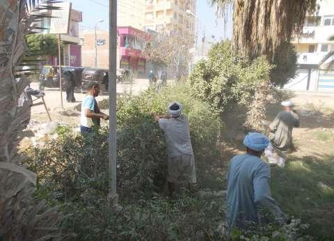 """رفع القمامة وتهذيب الأشجار بـ""""جمرك"""" الإسكندرية"""