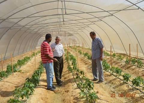 رئيس مدينة القصير زراعة 128 فدانا فواكهة بمزرعة القويح في البحر الأحمر