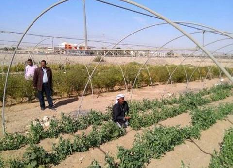 تفعيل برنامج القرية المنتجة في الوادي الجديد لخدمة المواطنين